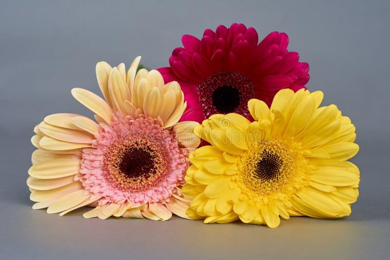Drie Bloemen Gerbera royalty-vrije stock afbeelding
