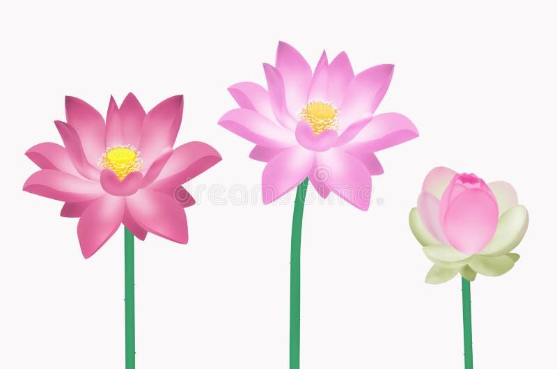 Drie bloemen van de colrlotusbloem stock illustratie