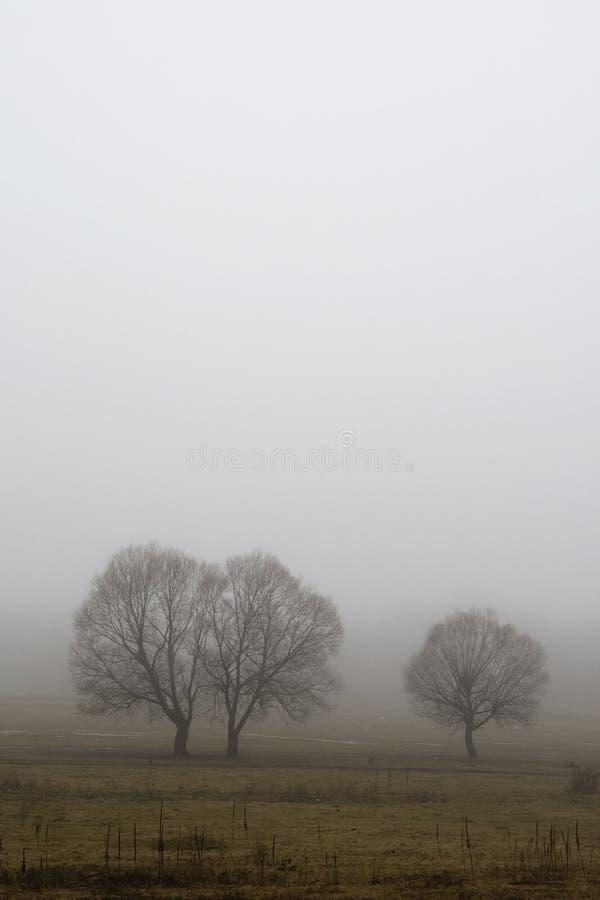 Drie bomen in de mist stock afbeelding