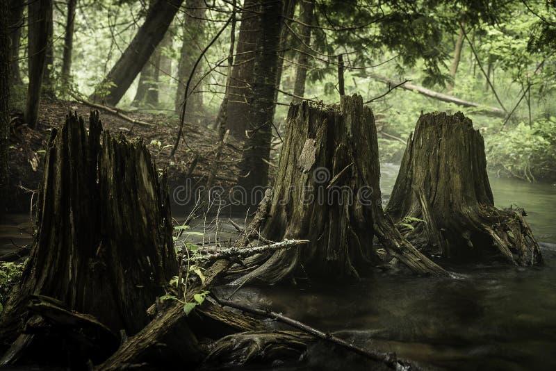 Drie boomstompen stock fotografie