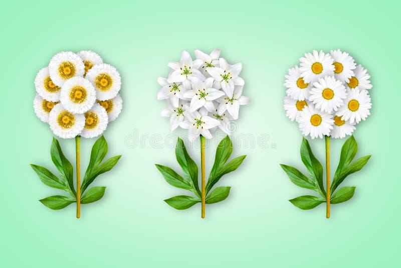 Drie buitensporige bloemen op een lichtgroene achtergrond De samenstelling van witte asters, lelies en camomiles Kunstvoorwerp mi stock foto