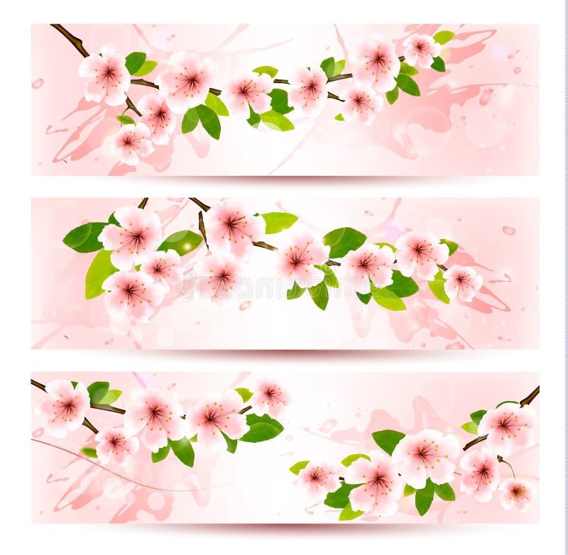 Drie de lentebanners met tot bloei komende sakurabrunch stock illustratie
