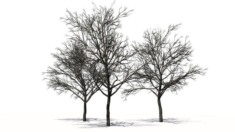 Drie die perzikbomen in de winter - op witte achtergrond wordt gescheiden royalty-vrije stock afbeelding
