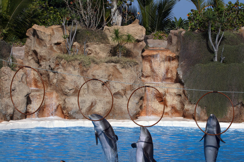 Drie dolfijnen die in ringen juming stock afbeeldingen
