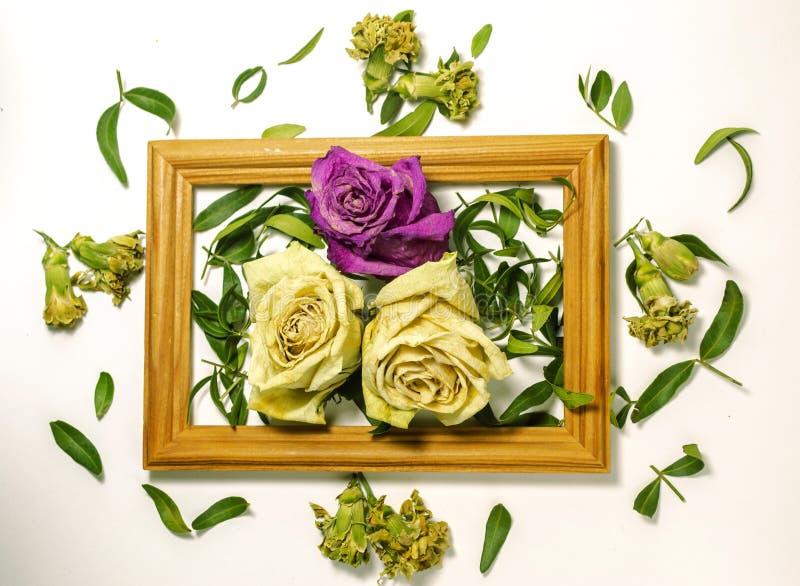 Drie droge rozen met bladeren, twee witte rozen, roze één namen toe stock foto's