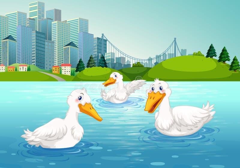 Drie eenden die in het meer zwemmen vector illustratie