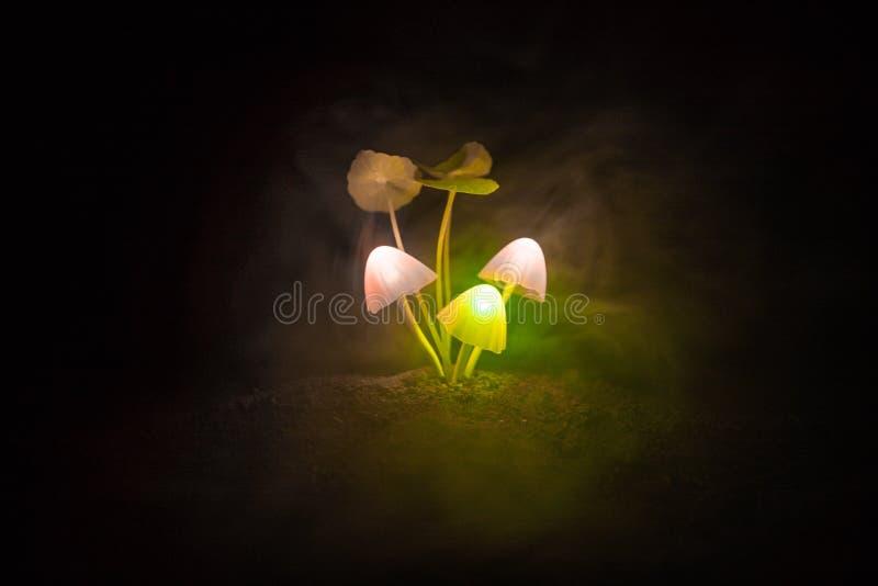 Drie fantasie gloeiende paddestoelen in geheimzinnigheid donker bosclose-up Mooi macroschot van magische paddestoel of drie die z stock foto's
