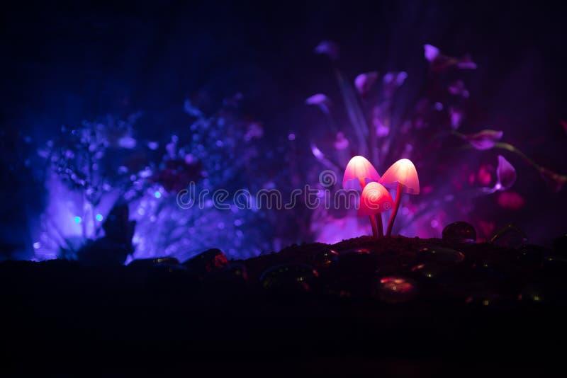 Drie fantasie gloeiende paddestoelen in geheimzinnigheid donker bosclose-up Mooi macroschot van magische paddestoel of drie die z stock foto