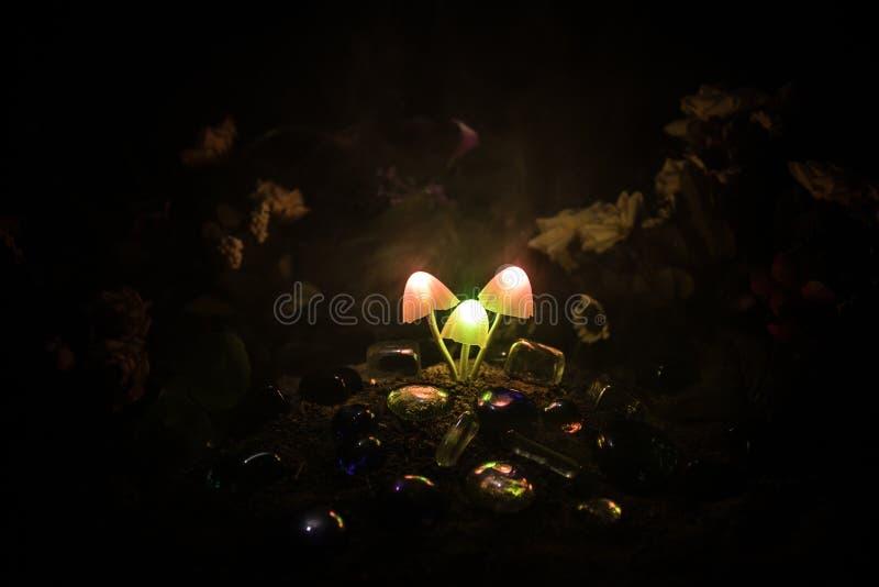 Drie fantasie gloeiende paddestoelen in geheimzinnigheid donker bosclose-up Mooi macroschot van magische paddestoel of drie die z royalty-vrije stock fotografie
