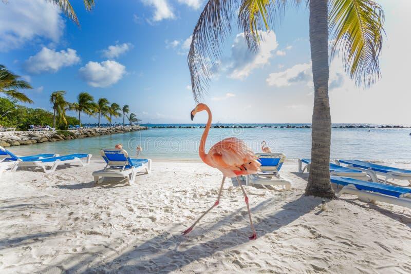 Drie flamingo's op het strand stock afbeeldingen