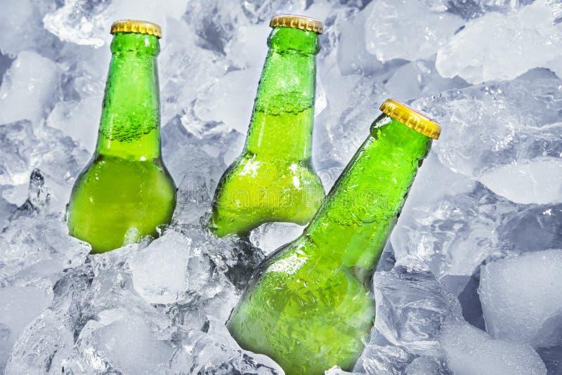 Drie flessen bier op ijs stock afbeelding