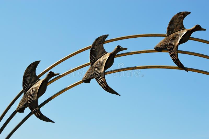 Drie ganzen het vliegen stock foto's