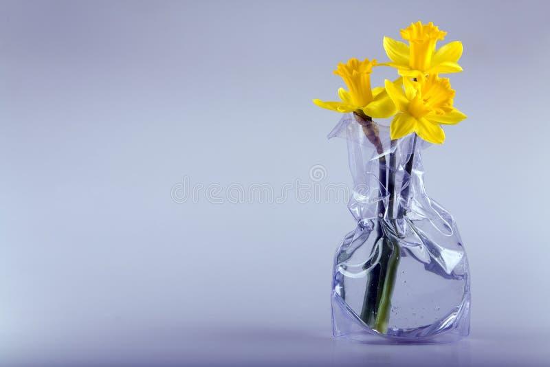 Drie gele narcissen royalty-vrije stock afbeeldingen