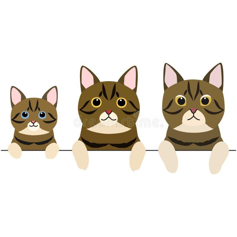 Drie generaties van de korte grens van haarkatten stock illustratie