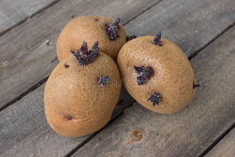 Drie geplukte ontkiemde aardappels op een oude lijst royalty-vrije stock afbeelding