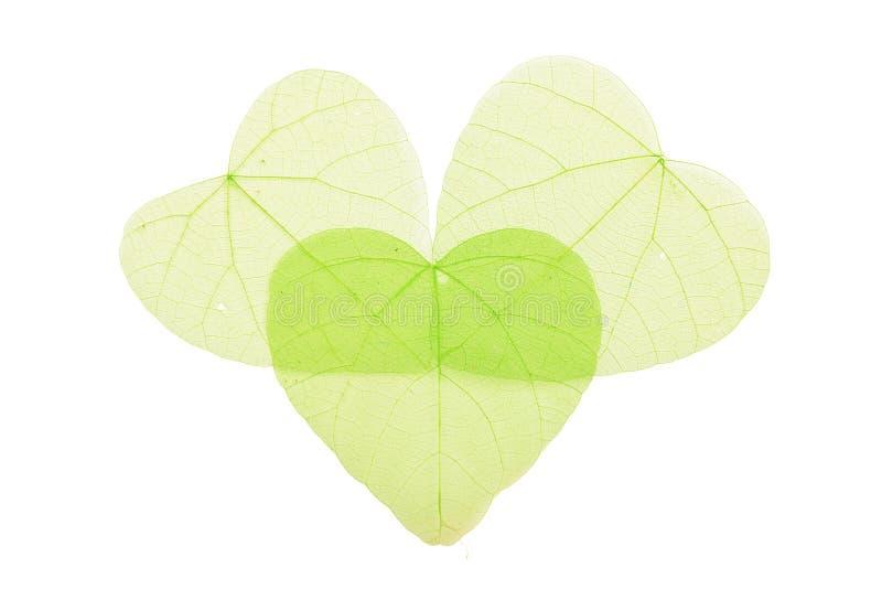 Drie groene hart gevormde skeletbladeren op wit stock foto's