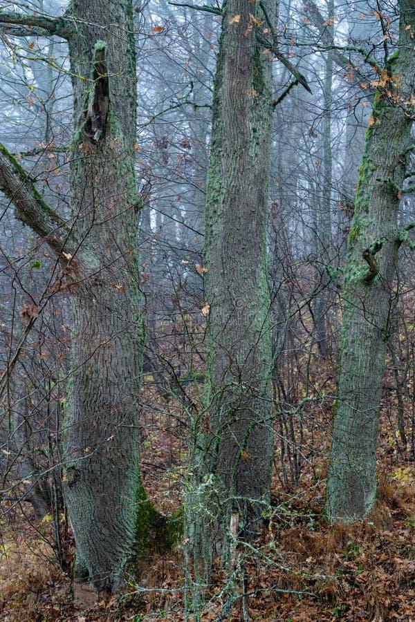drie grote mosbomen royalty-vrije stock foto's
