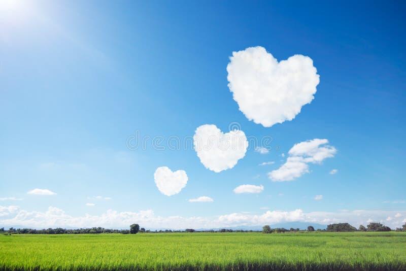 drie hart gevormde wolken op blauwe hemel en zonneschijn boven rijstfi royalty-vrije stock foto