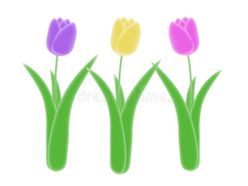 Drie isoleerden purpere gele en roze de illustratie groene stam en bladeren van de de lentetulp met witte achtergrond vector illustratie