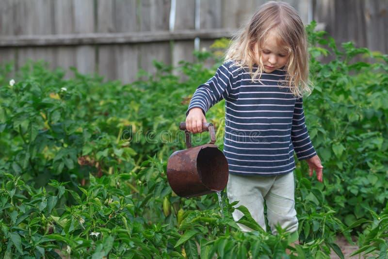 Drie jaar oud meisjes die plantaardige installaties in groene de zomertuin water geven royalty-vrije stock foto's