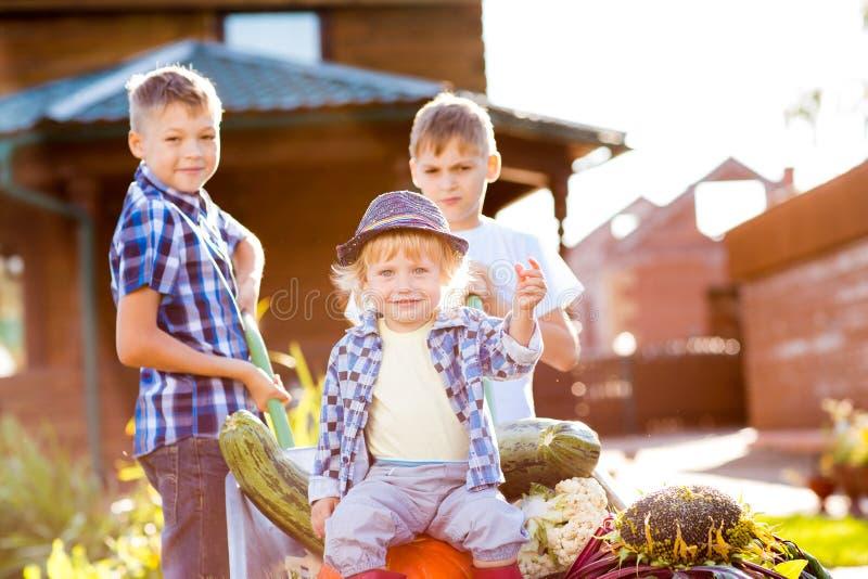 Drie jonge geitjesbroers als tuinlieden De zitting van de peuterjongen op kruiwagen met oogst stock foto