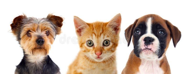 Drie jonge huisdieren royalty-vrije stock afbeelding