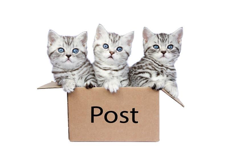 Drie jonge katten in kartondoos met woordpost stock afbeelding