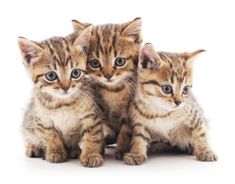 Drie katjes royalty-vrije stock foto's