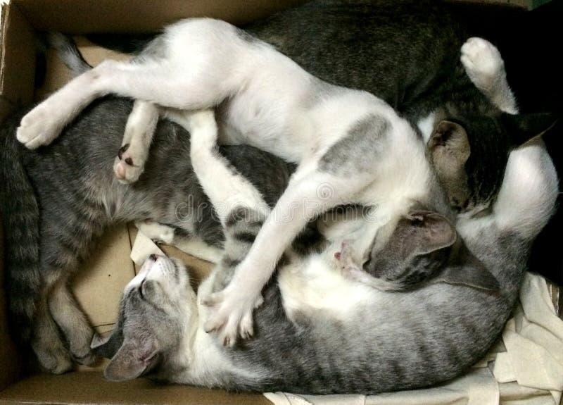 Drie katjes die samen in doos slapen royalty-vrije stock foto's