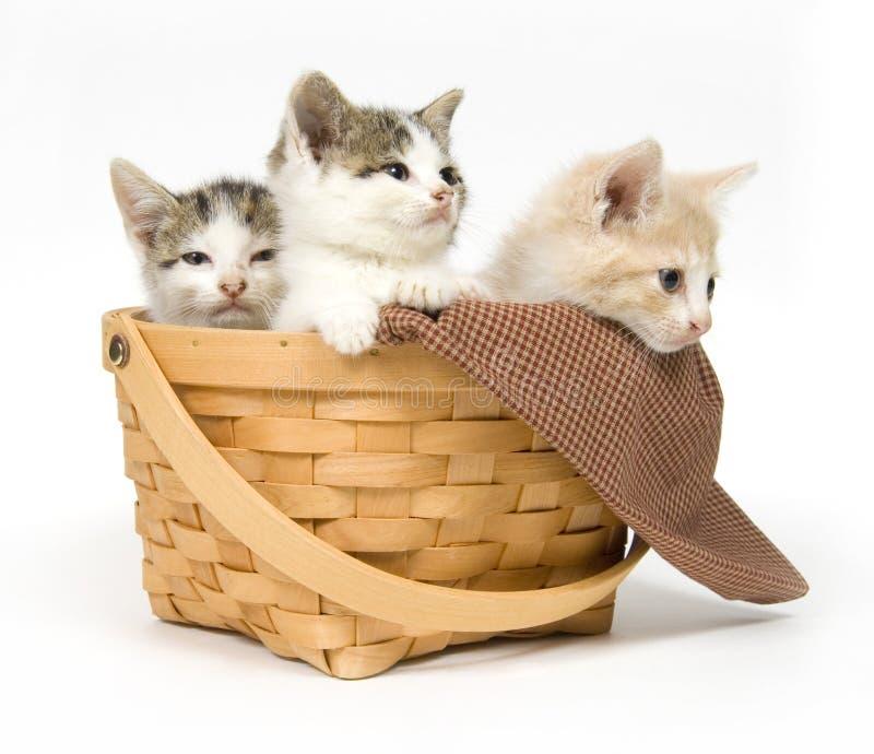 Drie katjes in een mand stock fotografie