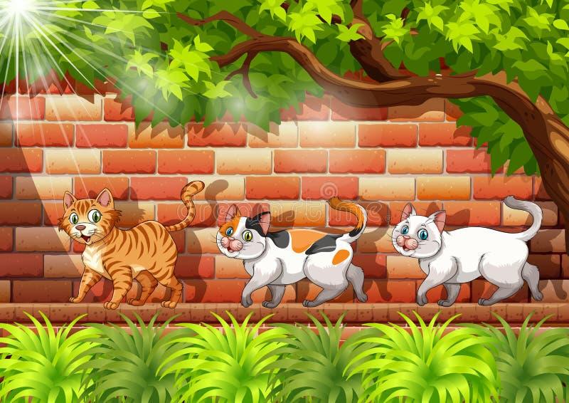 Drie katten die op de muur lopen vector illustratie