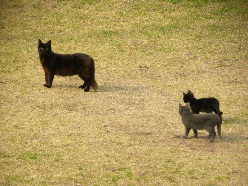 Drie katten die op het gras lopen royalty-vrije stock afbeeldingen