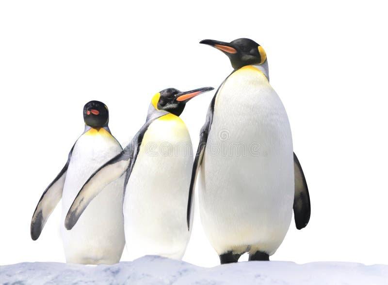 Drie Keizerpinguïnen op sneeuw royalty-vrije stock afbeeldingen