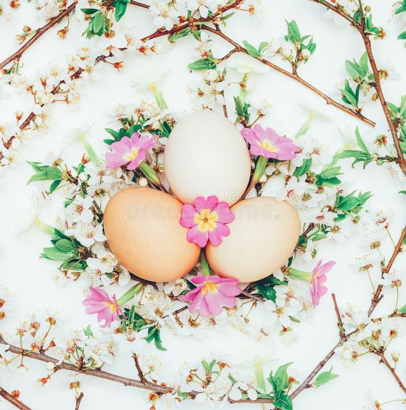 Drie kippeneieren in de bloeiende takken en bloemensleutelbloemen op een witte achtergrond stock foto