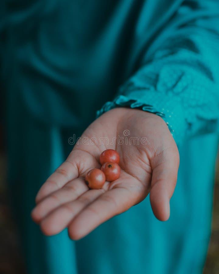 Drie Klein Cherry On Beautiful Hand stock afbeeldingen