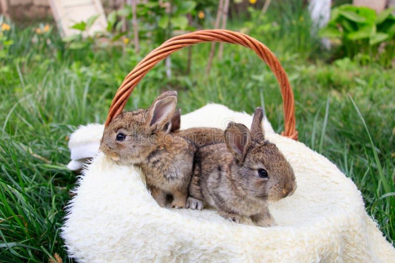 Drie kleine en mooie konijntjes stock foto