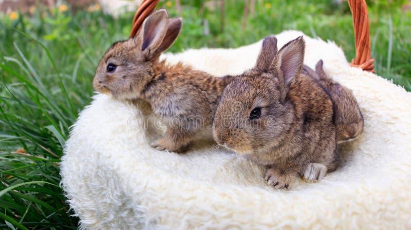 Drie kleine en mooie konijntjes stock fotografie