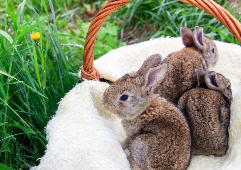 Drie kleine en mooie konijntjes stock foto's