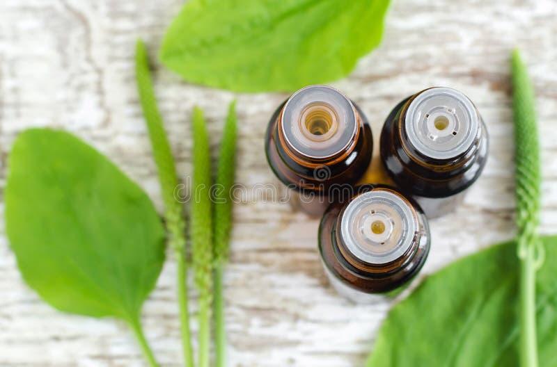 Drie kleine flessen grotere het uittrekseltint van weegbreepsyllium, olie, infusie Kruidengeneeskunde en aromatherapy concept Aan stock foto's
