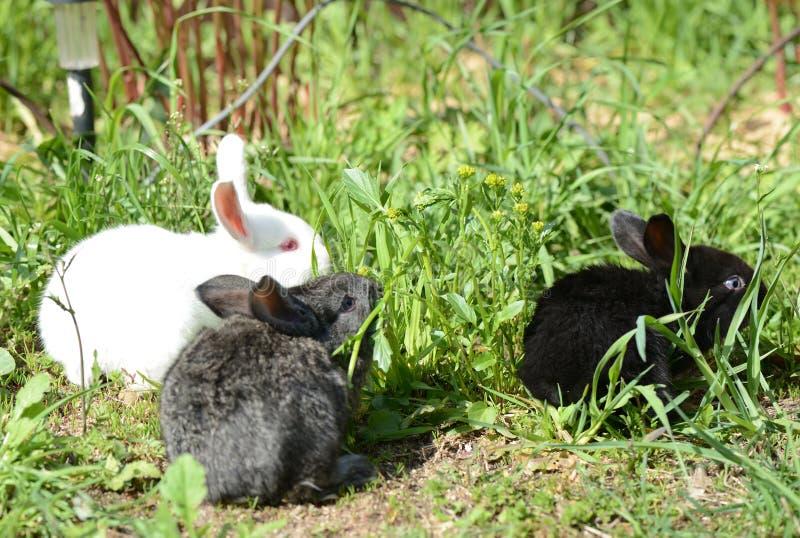 Drie kleine konijnen in het groene gras royalty-vrije stock foto