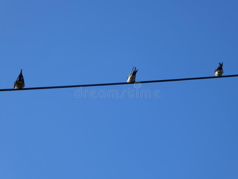 Drie kleine vogels stock afbeeldingen