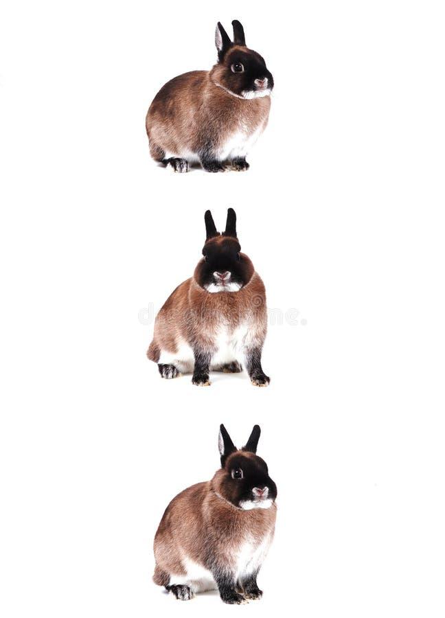 Drie konijnen royalty-vrije stock afbeeldingen