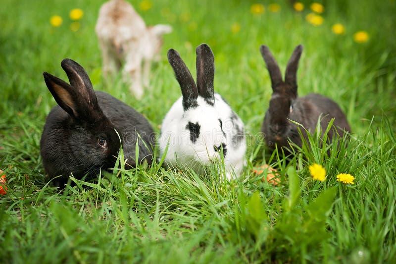 Drie konijnen in groen gras royalty-vrije stock fotografie