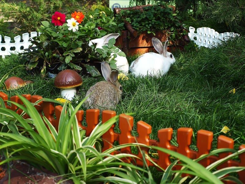 Drie konijnen in groen gras royalty-vrije stock foto