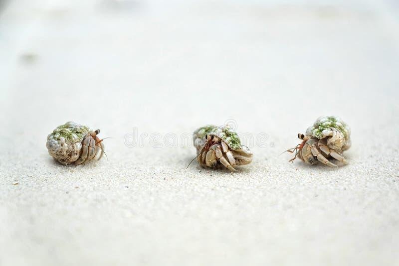 Drie krabben stock afbeeldingen