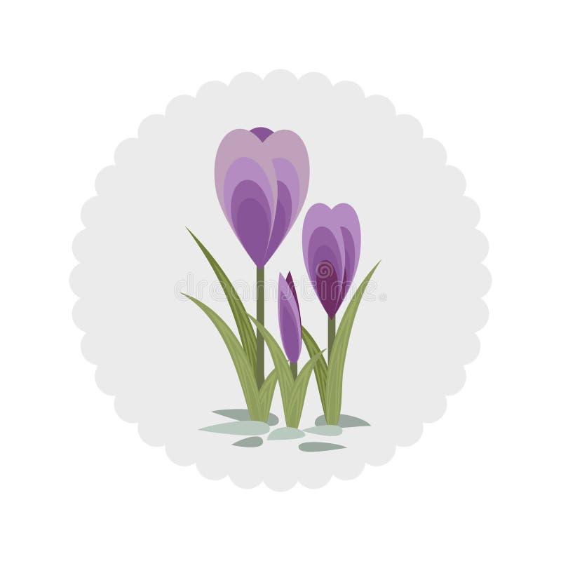 Download Drie krokussen vector illustratie. Illustratie bestaande uit schoonheid - 39106739