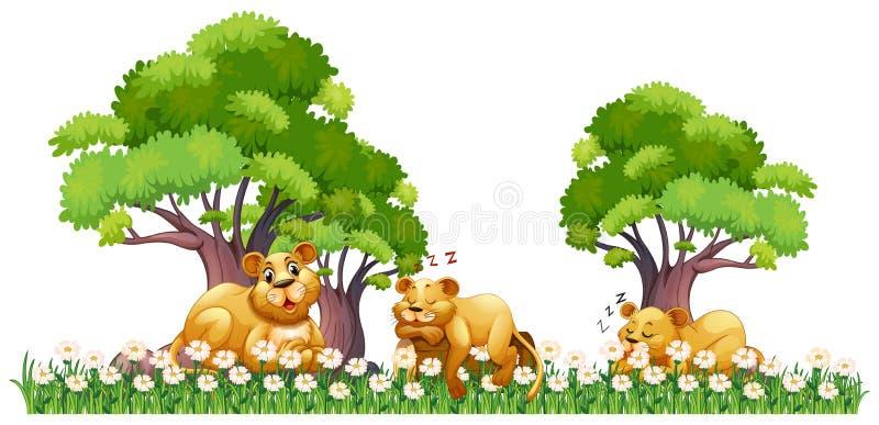 Drie leeuwen die op het gebied rusten vector illustratie