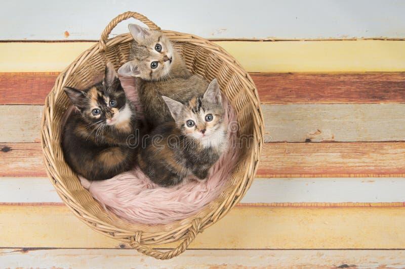 Drie leuke katjes van de babykat in een rieten mand die omhoog eruit zien stock fotografie