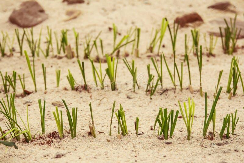 Drie lijnen van gras royalty-vrije stock foto's
