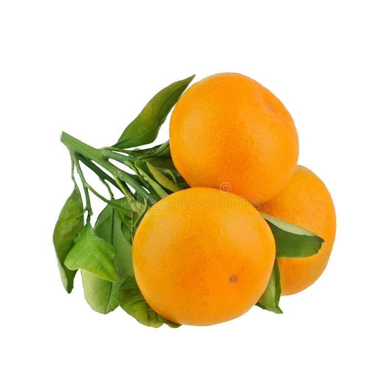 Drie mandarins op één tak met groene bladeren op een witte achtergrond isoleerden close-up stock foto's